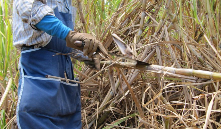 FILE - This April 27, 2010 file photo shows a worker cutting sugar cane at Hawaiian Commercial & Sugar, Hawaii's last sugar plantation in Puunene, Hawaii. The owners of Hawaii's last sugar plantation said they're getting out of the sugar-growing business. Sugar cane fields once spread across the islands, providing work to thousands of immigrants and shaping Hawaii life. (AP Photo/Audrey McAvoy, File)