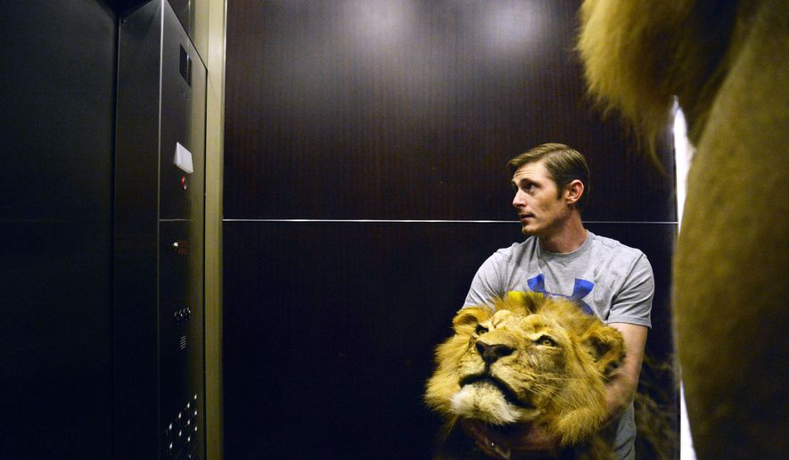 Conroe Taxidermy employee Brandon Casteel, of Conroe, Texas, holds a lion's head in an elevator while moving three taxidermic lions at the Kay Bailey Hutchison Convention Center on Wednesday Jan. 6, 2016 in Dallas. The Dallas Safari Club's annual convention starts Thursday and runs through the weekend. (Rachel Woolf/The Dallas Morning News via AP) MANDATORY CREDIT; MAGS OUT; TV OUT; INTERNET USE BY AP MEMBERS ONLY; NO SALES