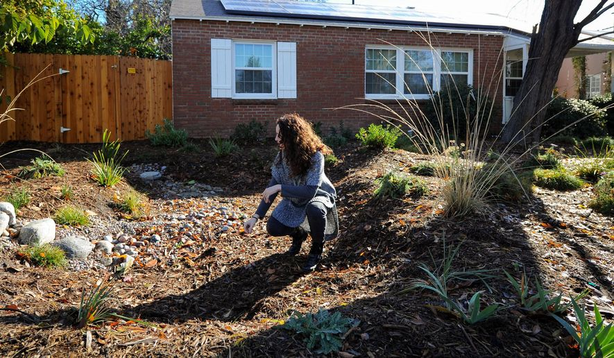 """Jessica Jewell, a marketing manager for the nonprofit TreePeople, kneels in a sunken """"rain garden"""" in the front yard of a home in North Hollywood, Calif., Thursday, Jan. 7, 2016, where rain water captured in a backyard cistern may be released during dry days. With California entering what may be a fifth year of drought, water agencies are moving to capture and store more water. (AP Photo/Michael Owen Baker)"""