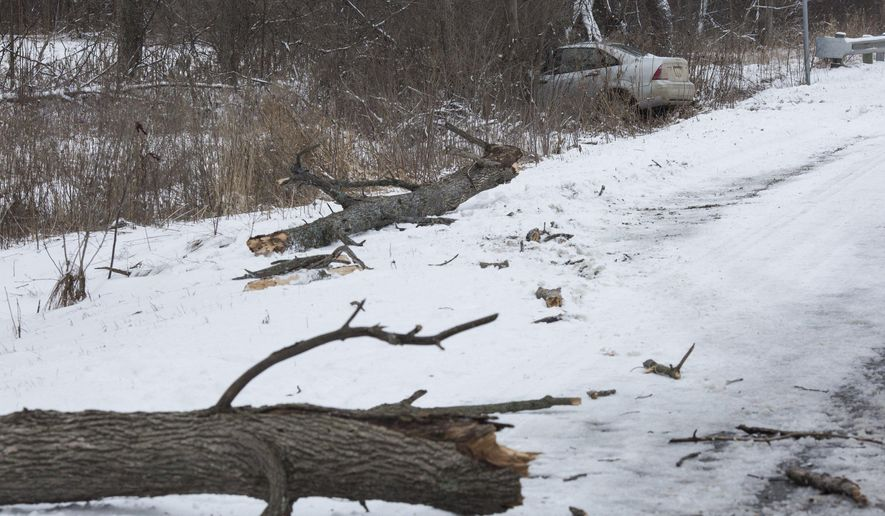 One man died when a tree fell on his car as he drove on a road on Sunday, Jan. 10, 2016 in Lapeer Township, Mich. (Conor Ralph/The Flint Journal-MLive.com via AP) LOCAL TELEVISION OUT; LOCAL INTERNET OUT; MANDATORY CREDIT