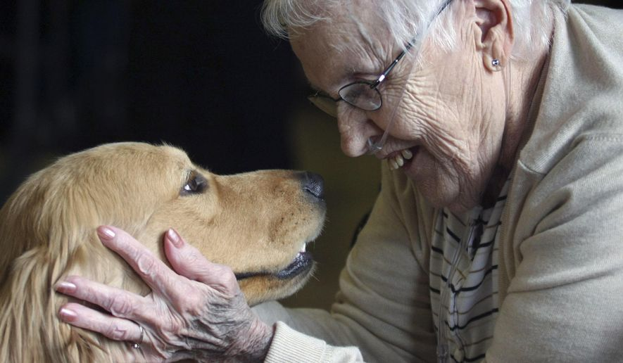 In this March 18, 2015 photo, Maxine Critchelow, a resident at Imboden Creek Living Center in Decatur, Ill., enjoys eye contact from comfort dog, Eli, during a PawPrint Ministries visit with residents. The faith-based organization thrives on helping those in need.  (Jim Bowling/Herald & Review via AP)