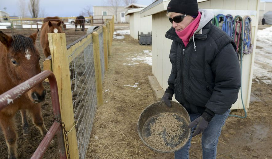 ADVANCE FOR SATURDAY, JAN. 23, 2016 AND THEREAFTER- In this photo taken on Friday, Jan. 15, 2016, volunteer Karen Koehler feeds pellets to a horse at the Colorado Horse Rescue in Boulder County, Colo. The Colorado Horse Rescue is nearly full to capacity. The shelter can care for up to 60 horses at any one time, and there are currently 55 at the facility.  (Lewis Geyer/The Daily Times Call via AP) NO SALES; MANDATORY CREDIT