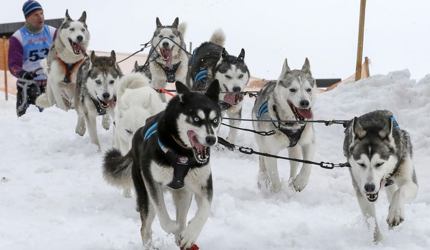 In this photo taken on Wednesday, Jan. 27, 2016, a musher competes with his dogs during the Sedivackuv Long dog sled race near the village of Destne v Orlickych horach, Czech Republic. The 240 Km (150 miles) race is a multi-day event, but was canceled today, two days early, because of poor snow conditions in the region. (AP Photo/Petr Josek)