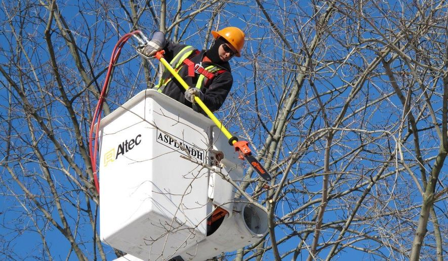 In this Jan. 27, 2016 photo, Jamie Peralta, an employee with Asplundh Tree Service, prunes branches off a tree in Plandome Heights, N.Y. The electric utility PSEG Long Island hires contractors like Asplundh to perform tree trimming annually on trees in an effort to prevent power outages during snowstorms and other severe weather. (AP Photo/Frank Eltman)