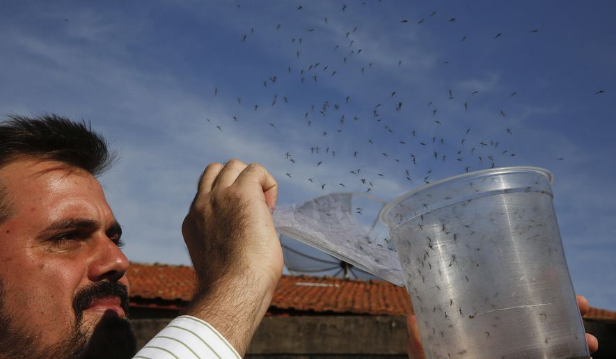 In this Feb. 1, 2016 photo, Guilherme Trivellato, from the British biotec company Oxitec, releases genetically modified Aedes aegypti mosquitoes, which are a vector for the spread of the Zika virus, in Piracicaba, Brazil. Oxitec raises male mosquitoes that have been modified to produce offspring that do not live. These males are released into the target area, where they compete with wild males to mate with the wild females. Brazil is in the midst of a Zika outbreak and authorities say they have also detected a spike in cases of microcephaly in newborn children, but the link between Zika and microcephaly is as yet unproven. (AP Photo/Andre Penner)