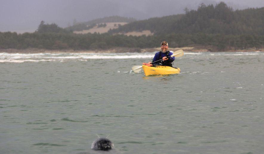 In this Jan 22, 2016 photo, Joshua Uithof of Kayak Tillamook encounters a harbor seal during a paddling trip at Oregon's Sand Lake. (Zach Urness/Statesman-Journal via AP) MANDATORY CREDIT