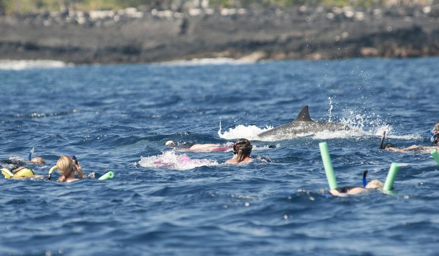 This Aug. 15, 2012 photo provided by Murdoch University dolphin researcher Julian Tyne shows people swimming near dolphins in Makako Bay in Kailua-Kona, Hawaii. Swimming with dolphins is a dream for many tourists visiting Hawaii, but federal regulators are preparing to propose rules that could ban or limit swimming with Hawaii's spinner dolphins out of concern humans are depriving the nocturnal animals of the rest they need. Picture taken under NOAA permit GA LOC15409. (Julian Tyne via AP) MANDATORY CREDIT