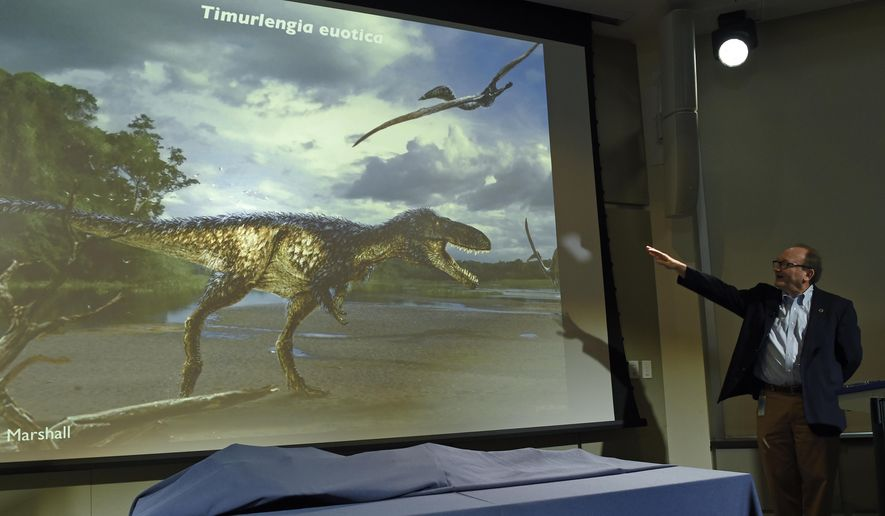 Hans-Dieter Sues, chair of the Department of Paleobiology at the Smithsonian's National Museum of Natural History, unveils a new dinosaur, Timurlengia euotica, during a news conference in Washington, Monday, March 14, 2016. The bones of a previously unknown member of the evolutionary branch that led to the huge tyrannosaurs were found Uzbekistan. This earlier dinosaur lived about 90 million years ago, south of what is now the Aral Sea. It looked roughly like a T. rex, but was only about 10 to 12 feet long and weighed only about 600 pounds at most, Sues said.  (AP Photo/Susan Walsh)