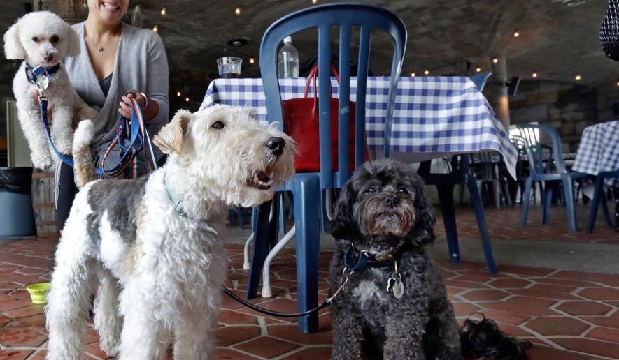 "FILE - In this May 19, 2015 file photo, Michelle Vargas, with, from left, 8-year-old Bichon Frise-Poodle mix ""Carmine,"" 11-year-old Wire Haired Terrier ""Lucy,"" and 10-year-old Shih Tzu-Poodle mix ""Luigi,"" visit a cafe in a Manhattan park, on New York's Upper West Side. New York City restaurants with outdoor tables will soon be able to welcome four-legged guests under new rules announced by the city Health Department.The regulations announced Tuesday March 15, 2016, will permit dogs that are licensed and vaccinated against rabies to join their human chowhounds at participating restaurants. (AP Photo/Richard Drew, File)"