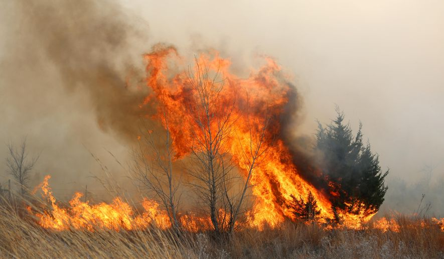 A tree erupts in flames as the grass fire continues to burn east of Lake City, Kan., Wednesday, March 23, 2016. A large grass fire burnt thousands of acres in Barber County. (Travis Morisse/The Hutchinson News via AP) MANDATORY CREDIT