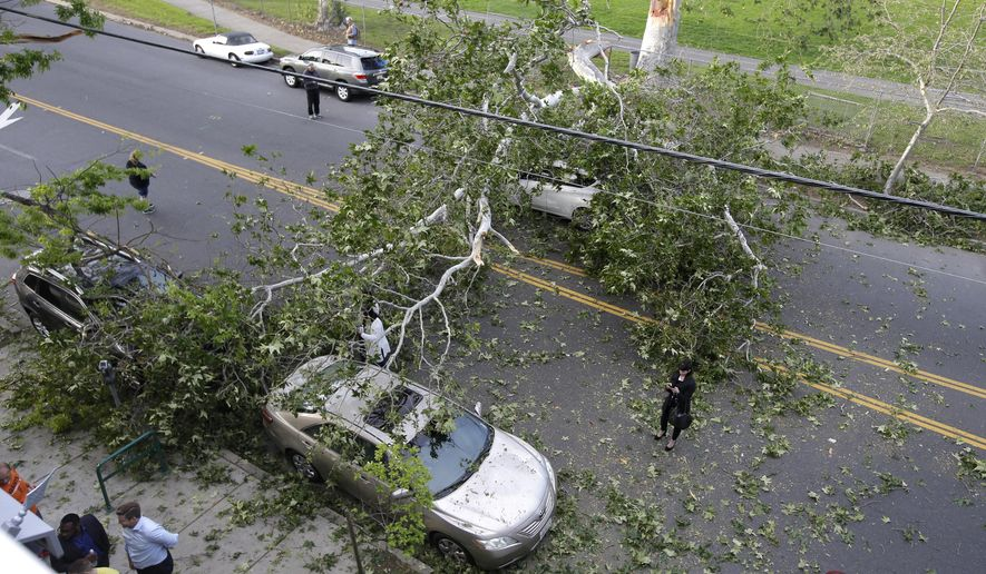 No one was injured when a the limb from a large tree fell on on J St. in Sacramento, Calif., Monday, March 28, 2016. Tracy Courtney, who was driving westbound in her 2014 Nissan Versa when the branch fell, emerged from the car unscathed. (AP Photo/Rich Pedroncelli)