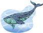4_5_2016_b4-cham-blue-whale-8201.jpg