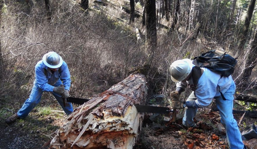 ADVANCE FOR WEEKEND EDITIONS - In this March 31, 2016 photo, volunteers Jim Talburt, left, and Ned Davis saw through a cedar that had fallen on the North Umpqua Trail in the Boulder Creek Wilderness area in Douglas County, Ore. (Emily Hoard/The News-Review via AP) MANDATORY CREDIT