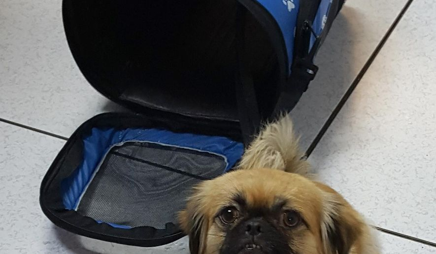 In this Thursday, April 14, 2016 photo, provided by the U.S. Customs and Border Protection, CPB, shows a dog that was rescued along with a group of 8 Cuban migrants from Mona Island, Puerto Rico. Officials say that a young child was part of the group and that the federal agency is temporarily caring for the dog. (U.S. Customs and Border Protection via AP)