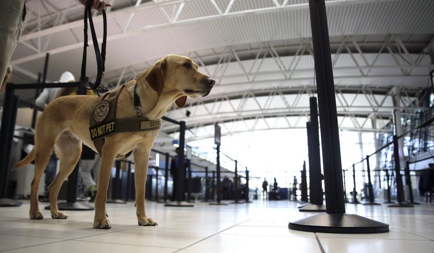 FILE - In this April 12, 2016 file photo, Eette, , specially trained by the Transportation Security Administration (TSA) to detect explosives on moving objects in busy environments like an airport, stands at a security checkpoint as part of a demonstration at Lambert-St. Louis International Airport Tuesday in St. Louis. The Senate approved a bipartisan aviation policy bill Tuesday, April 19, 2016, that would boost airport security, extend new protections to airline passengers and help speed the introduction of package-delivery drones.  (AP Photo/Jeff Roberson, File)