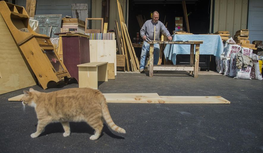 In this March 22, 2016, photo, Sonny Zeigler works outside at his Baltimore Pike shop as his cat, Buddy, strolls by in Littlestown, Pa. Zeigler has been in the furniture business for 31 years and opened his current shop, Zeiglers Country Stuff, 13 years ago in Littlestown. (Clare Becker/The Evening Sun via AP) MANDATORY CREDIT