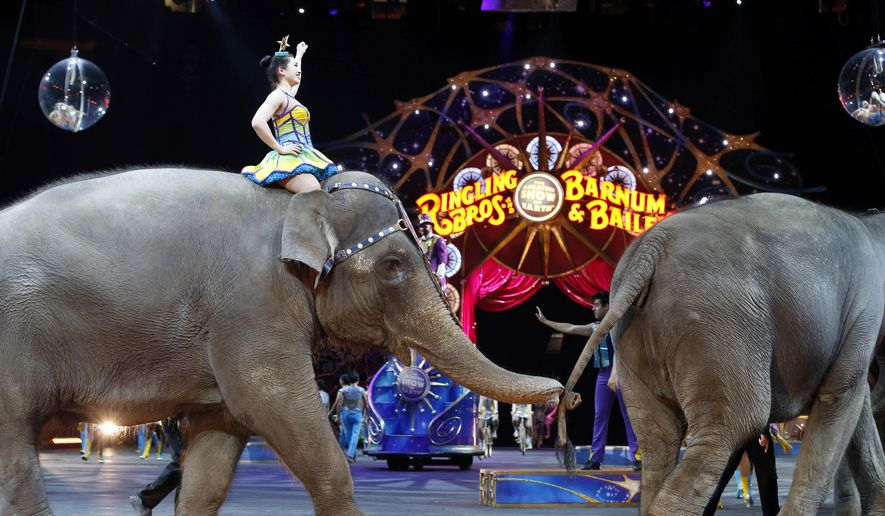 FILE - In this March 19, 2015, file photo, elephants walk during a performance of the Ringling Bros. and Barnum & Bailey Circus, in Washington. Ringling Bros. is scheduled to hold its final elephant show during a performance Sunday night, May 1, 2016, in Providence, R.I. (AP Photo/Alex Brandon, File)