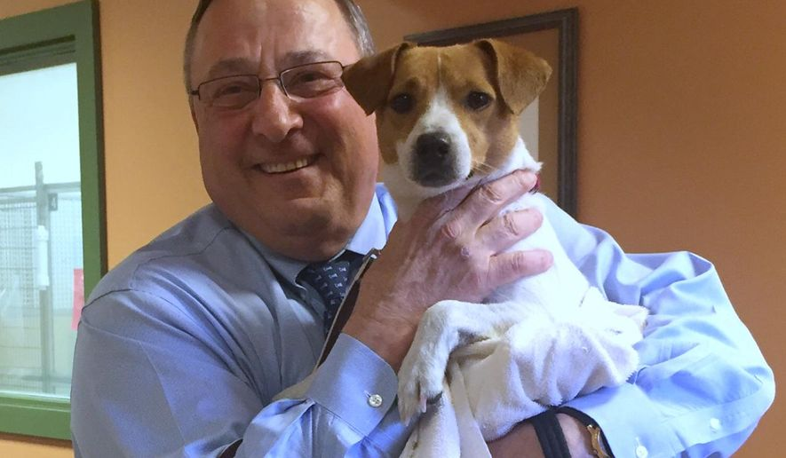 "In this photo provided by the Greater Androscoggin Human Society, Maine Gov. Paul LePage holds a dog he adopted and named ""Veto"" on Tuesday, May 3, 2016, at the Greater Androscoggin Humane Society in Lewiston, Maine. LePage holds the state record for vetoes. (Zachary Black/Greater Androscoggin Human Society via AP)"