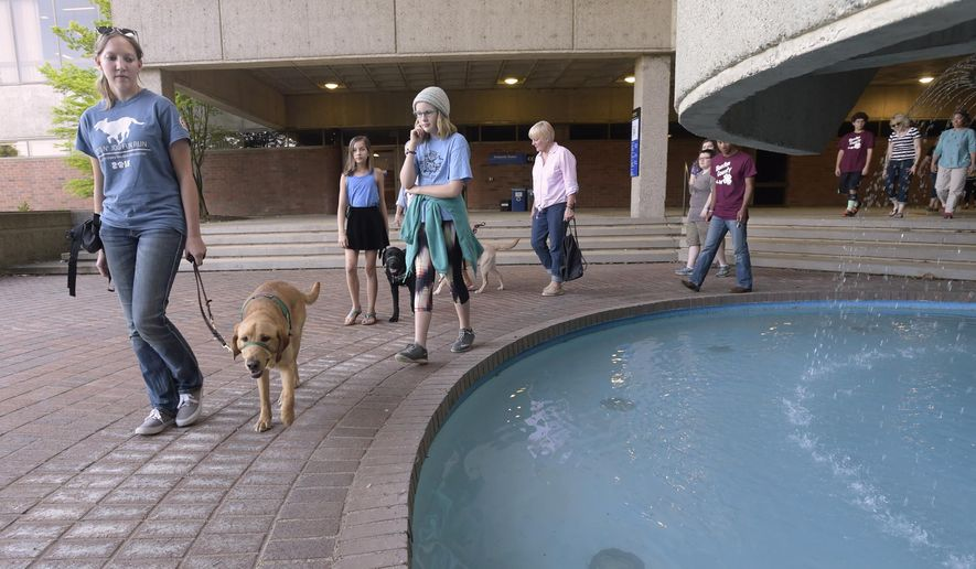 Meghan Knetle, 19, an Oregon State University animal science student, leads Mycroft, a yellow Lab in training, around a fountain at Linn-Benton Community College in Albany, Ore., Tuesday April 19, 2016. She is followed by Brian Benson, 11, of Philomath, Ore., Mya Flannery, 10, of Corvallis, with Vale, a 6-month-old black Lab, and other members of Eyeraisers 4-H. (David Patton/Albany Democrat-Herald via AP)
