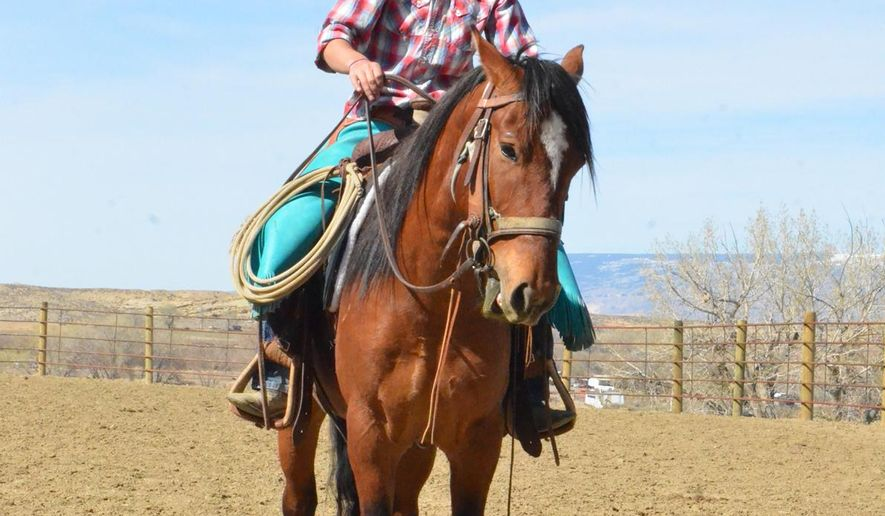 In a April 21, 2016 photo, Dana Andersen, of Powell, Wyo., and mustang Loco Bueno are gearing up to compete in Idaho at the end of July. The mustang was rounded up last fall and had essentially no human contact prior to Andersen picking him up for training in the Extreme Mustang Makeover challenge. In the challenge put on by the Mustang Heritage Foundation and Bureau of Land Management,  Andersen and her competitors each have about 100 days to gentle a wild horse for the chance to win an estimated purse of $20,000 and trophy buckle at the Ford Idaho Horse Park in Nampa, Idaho. (Matt Naber/Powell Tribune via AP)