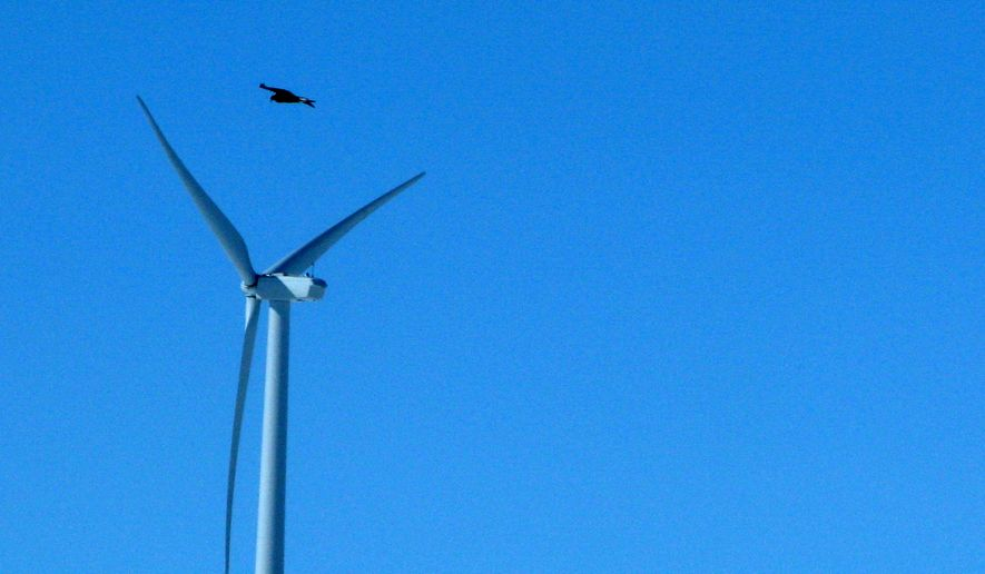 FILE - In this April 18, 2013, file photo, a golden eagle is seen flying over a wind turbine wind farm in Converse County Wyo. The Obama administration is revising a federal rule that allows wind-energy companies to operate high-speed turbines for up to 30 years, even if means killing or injuring thousands of federally protected bald and golden eagles.  (AP Photo/Dina Cappiello, File)