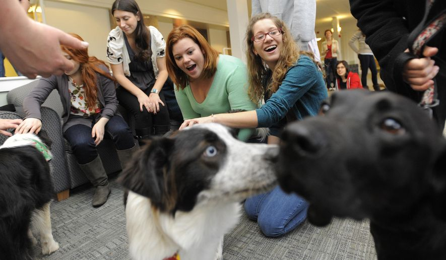 ADVANCE FOR SATURDAY, MAY 7 - FILE - In this Dec. 14, 2010, file photo, Tufts University students Katie Hagerty of Downingtown, Pa., second from right, and Marisa Shapiro of Calabasas, Calif., right, take a break from their studies to pet Meika, an Australian Shepherd mix, second from right, and Troy, a chocolate labrador mix, right, on the university's campus in Medford, Mass. Therapy dogs, trained and certified to interact with people in institutional settings, were once the province of nursing homes, hospitals and elementary schools, but now therapy dog handlers include college campuses on their itineraries in an effort to calm students stressed out as final approach. (AP Photo/Gretchen Ertl, File)