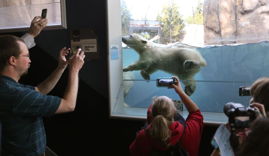 Hope, the new polar bear cub at the Toledo Zoo, makes it's public exhibit debut Friday, May 6, 2016 in Toledo, Ohio.  She was born Dec. 3 to a 16-year-old bear named Crystal. (Dave Zapotosky/The Blade via AP)  MANDATORY CREDIT; MAGS OUT; NO SALES; TV OUT; SENTINEL-TRIBUNE OUT; MONROE EVENING NEWS OUT; TOLEDO FREE PRESS OUT