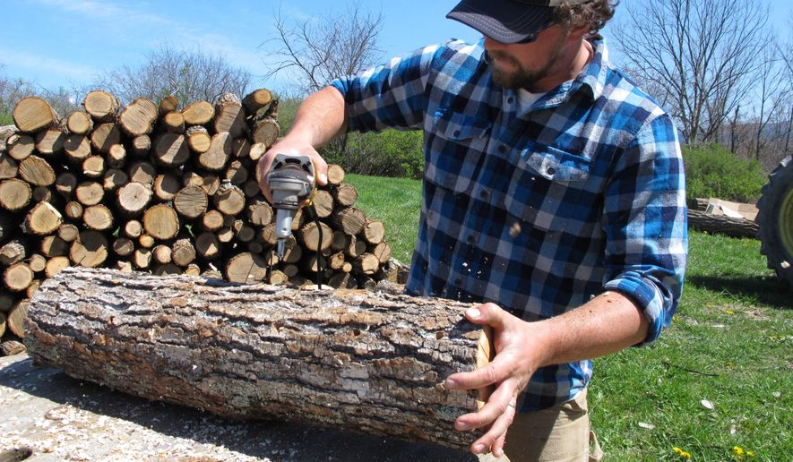 In this Friday, May 6, 2016 photo, mushroom grower Andy Bojanowski drills holes in a log that will be filled with shiitake spawn at Eddy Farm in Middlebury, Vt. The farm will host the sixth annual Shiitakepalooza on Saturday at which volunteers help mushroom growers inoculate logs that will eventually sprout shiitake mushrooms that can bring in $16 to $20 a pound. (AP Photo/Lisa Rathke)