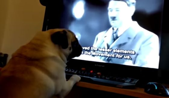 Markus Meechan has been arrested on hate crime charges over an online video that purportedly showed a dog making a Nazi salute, Police Scotland said.