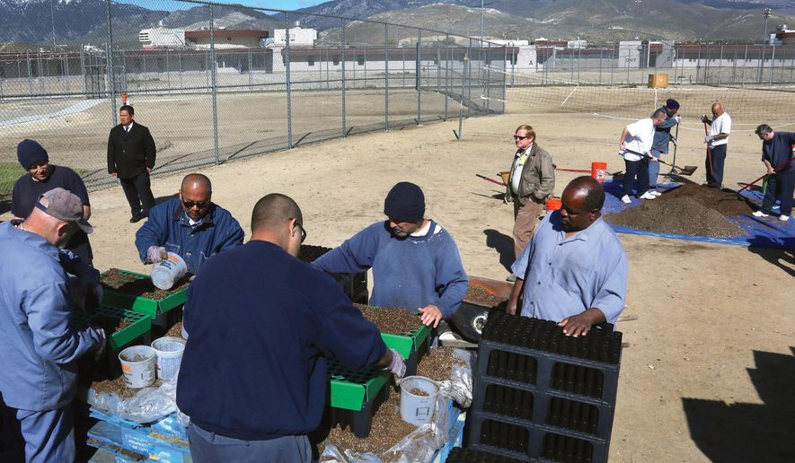 This Tuesday, April 26, 2016 photo northern Nevada Correctional Center inmates work together to sow sagebrush seeds that will be grown this summer and planted in the fall at the prison in Carson City, Nev. Some 20 Northern Nevada Correctional Center inmates are planting thousands of sagebrush seeds in a program aimed at restoring sage grouse habitat across Northern Nevada. (Jim Grant/Nevada Appeal via AP)    MANDATORY CREDIT