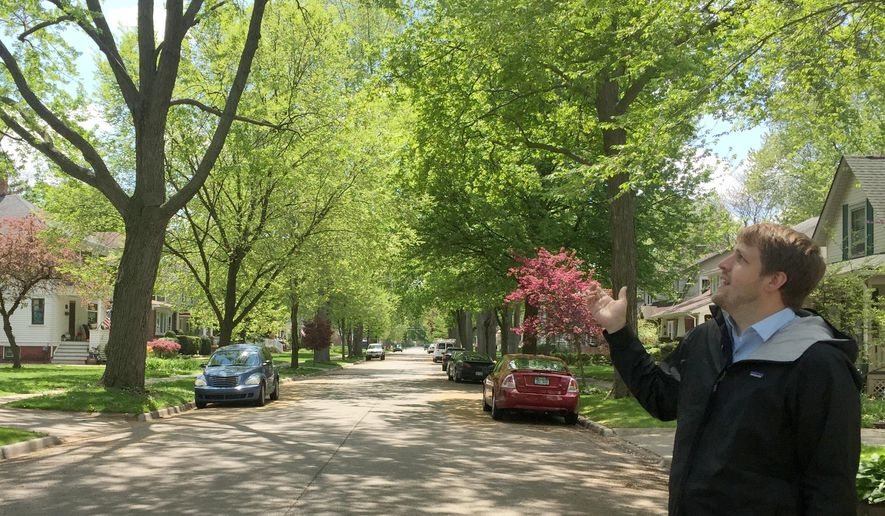 In a May 13, 2016 photo, Brent Geurink, associate planner with the Macomb County Department of Planning & Economic Development, talks about the tree canopy on Lodewyck in Mt. Clemens, Mich. This is an example of the tree canopy, or coverage, that authorities with the Green Macomb Urban Forest Project would like to see in more areas of the county. (Christina Hall/Detroit Free Press via AP)  DETROIT NEWS OUT; TV OUT; MAGS OUT; NO SALES; MANDATORY CREDIT DETROIT FREE PRESS