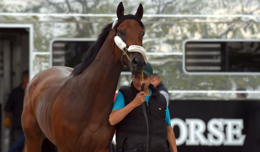 Kentucky Derby winner, Nyquist, arrives at Pimlico Race Course for the running of the 141st Preakness Stakes in Baltimore on Monday, May 9, 2016. Unbeaten Nyquist arrived at Pimlico on Monday and was eased into Stall 24 of the Stakes Barn with six other horses trained by O'Neill. (Lloyd Fox/The Baltimore Sun via AP) MANDATORY CREDIT