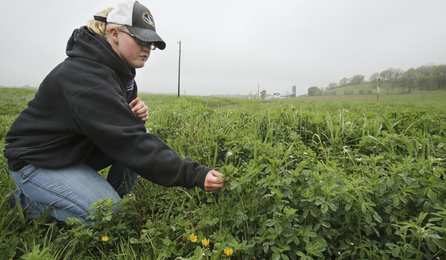 ADVANCED FOR RELEASE SATURDAY, MAY 21, 2016 Sarah Endres points out the different types of plants growing in a buffer area including grass, alfalfa and clover at her family's farm in Waunakee, Wis., Wednesday, May 11, 2016. (Amber Arnold/Wisconsin State Journal via AP)