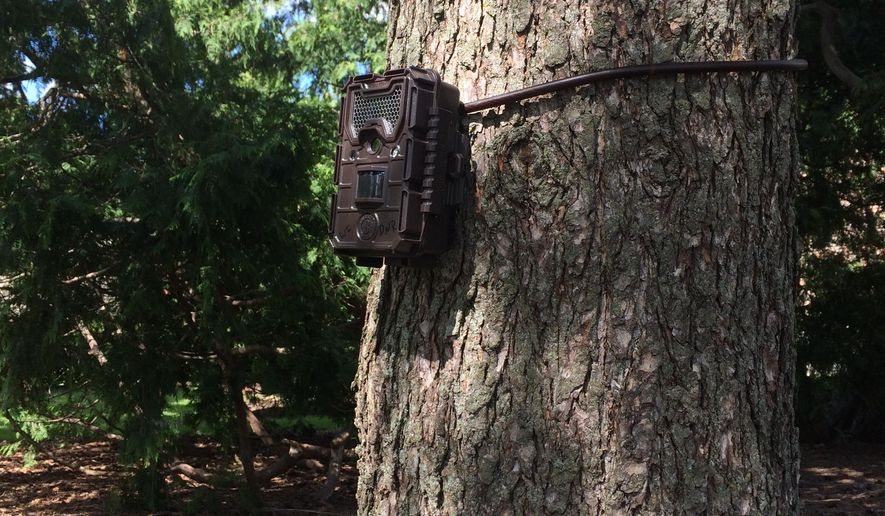 In this May 2016 photo provided by the University of Wisconsin, a trail camera is positioned on a tree to capture images of wildlife in Madison, Wis. Scientists have launched an ambitious new project that uses trail cameras to inventory wildlife and tamp down simmering questions about how many deer really roam the state. The researchers hope the photos will provide better estimates of wildlife populations. (John Clare/University of Wisconsin via AP)