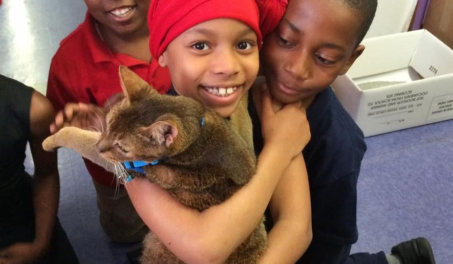 """In this May 19, 2016 photo provided by Lisa Fernandez, school children interact with """"Rubio,"""" who is a poster cat for The Paw Project, an advocacy organization against feline declawing. Fernandez, a Brooklyn elementary school principal, leads a program to teach the schoolchildren about declawing and help them stage action against it. At rear left is Jacques Cadeau, Suleila Clarke, is in the foreground and Brandon Blue is at right. (Lisa Fernandez via AP)"""