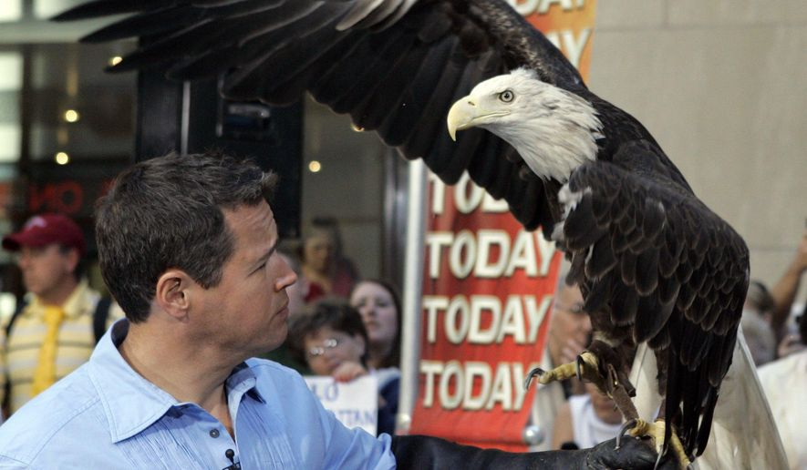 """FILE - In this July 3, 2007 file photo, Jeff Corwin works with Harriet, a bald eagle from the National Eagle Center, in Wabasha, Minn., during their appearance on the NBC """"Today"""" television program in New York. One of Minnesota's most famous eagles has died at the ripe old age of 35. The National Eagle Center in Wabasha, where she lived  since 2000, announced Thursday, May 26, 2016, that Harriet was euthanized Wednesday due to her declining health. (AP Photo/Richard Drew, File)"""