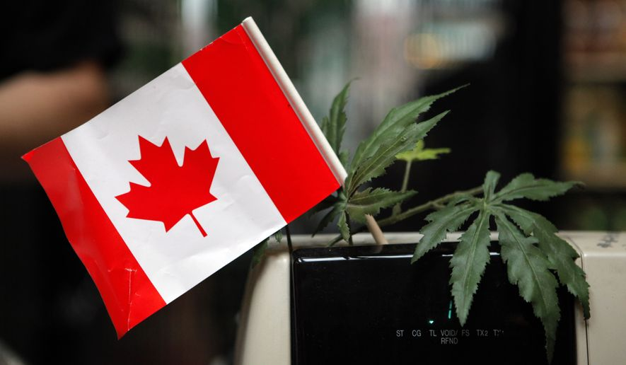 A cash register is adorned with a Canadian flag and imitation marijuana leaves at the BC Marijuana Party Headquarters in Vancouver, British Columbia, on Feb. 23, 2010. (Associated Press) **FILE**