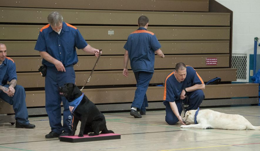 ADVANCE FOR USE MONDAY, MAY 30 - In this photo taken Wednesday, May 17, 2016, inmates at the G. Robert Cotton Correctional Facility in Jackson, Mich., do training with puppies from the Leader Dogs for the Blind program in a gymnasium at the prison. The Prison Puppies initiative benefits both the inmates and the Leader Dog program.  (J. Scott Park/Jackson Citizen Patriot via AP) LOCAL STATIONS OUT; LOCAL INTERNET OUT; MANDATORY CREDIT