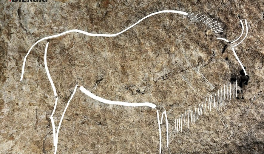 """This image released by the Diputacion Floral de Bizkaia on Friday May 27, 2016, shows a cave drawing. Spanish archaeologists say they have discovered an exceptional set of Paleolithic-era cave drawings that could rank among the best in a country that already boasts some of the world's most important cave art. Chief site archaeologist Diego Garate said Friday that an estimated 70 drawings were found on ledges 300 meters (1,000 feet) underground in the Atxurra cave, Berriatua, in the northern Basque region. He described the site as being in """"the Champions' League"""" of cave art, among the top 10 sites in Europe. (Diputacion Floral de Bizkaia/Source via AP)"""