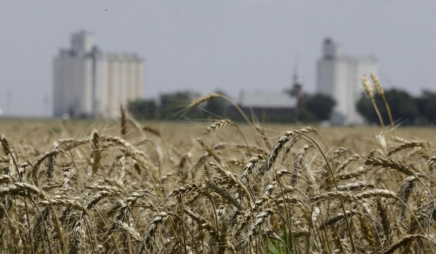 FILE -- In this June 21, 2015 file photo, wheat stands ready for harvest in a field near Anthony, Kan. Grain elevators are bracing for a big winter wheat crop in Kansas. But elevators are brimming with last year's crops due to lackluster exports and low prices. Industry group Kansas Grain and Feed Association says elevators have added storage and have been moving a grain out of the state on long trains to make more room. (AP Photo/Orlin Wagner, File)