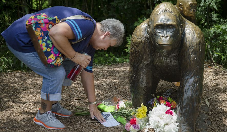 Eula Ray, of Hamilton, whose son is a curator for the zoo, touches a sympathy card beside a gorilla statue outside the Gorilla World exhibit at the Cincinnati Zoo & Botanical Garden on Sunday. On Saturday, a special zoo response team shot and killed Harambe, a 17-year-old gorilla, that grabbed and dragged a 4-year-old boy who fell into the gorilla exhibit moat. (Associated Press)