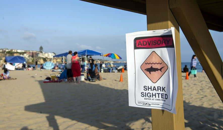 Lifeguards shut down Corona del Mar State Beach on Sunday after a swimmer was pulled injured from the water with bite marks in a possible shark attack, authorities said. (The Orange County Register via Associated Press)