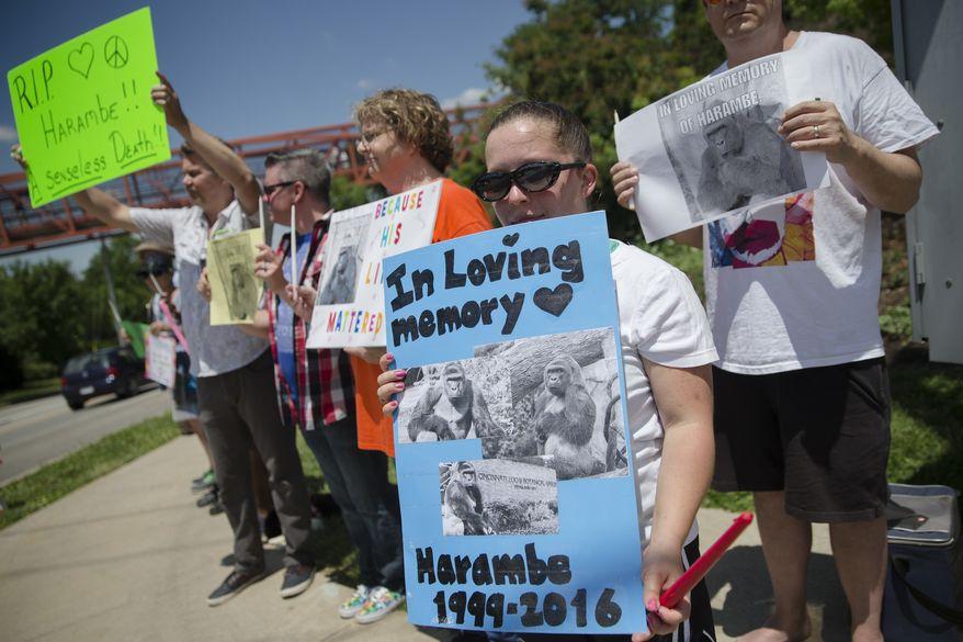 Kate Villanueva of Erlanger, Kentucky, holds a sign depicting the gorilla Harambe during a vigil outside the Cincinnati Zoo & Botanical Garden on Monday. (Associated Press)