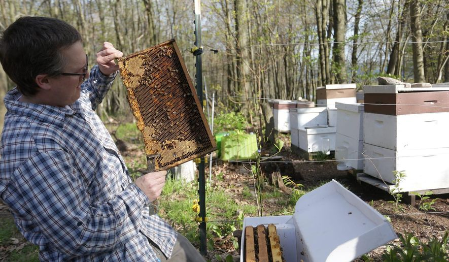 In this May 19, 2016 photo, Jason Newkirk holds one of his hives at Newkirk Honey Farm, in Scranton, Pa. (Jake Danna Stevens /The Times & Tribune via AP) WILKES BARRE TIMES-LEADER OUT; MANDATORY CREDIT