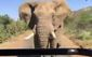 Elephant Arnold Schwarzenegger.jpg