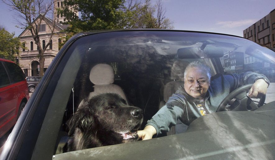 In this May 6, 2016 photo, Loren Podlinsek takes her Newfoundland-mix Butkus on an early morning drive every day around Taylorville, Ill. Since Butkus has health complications, he cannot walk long distances. Their route includes a drive past the pictured Taylorville town square. (Jim Bowling/Herald & Review via AP)  MANDATORY CREDIT