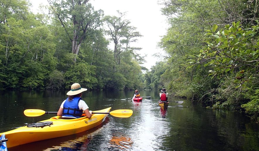 This undated photo provided by Black River Outdoors Center shows kayakers entering a cypress swamp on the Waccamaw River in South Carolina. Kayak trips through the swamp offer quiet natural surroundings and a tranquil contrast to busy nearby Myrtle Beach. (Black River Outdoors Center via AP)