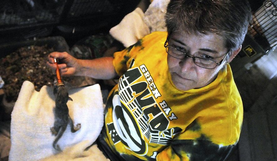 ADVANCE FOR USE SATURDAY, JUNE 4 AND THEREAFTER - In this May 6, 2016 photo, Dawn Tutt feeds an orphaned squirrel from a syringe at her home in Kankakee, Ill. Tutt and two other volunteers are leaders of the 3D Wildlife Rescue and Rehab project in Kankakee County. They have made caring for orphaned squirrels, rabbits, raccoons, and even opossums a 24/7 responsibility. (Mike Voss/The Daily Journal via AP)  MANDATORY CREDIT