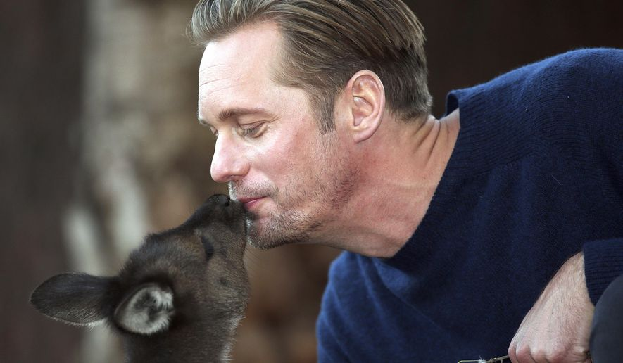 Actor Alexander Skarsgard, who plays Tarzan in The Legend of Tarzan is kissed by a kangaroo Joey as he poses for photos at Wildlife Sydney Zoo in Sydney, Australia, Tuesday, June 14, 2016. Skarsgard is in Sydney to promote his film which opens in the country on July 7, 2016.(AP Photo/Rob Griffith)