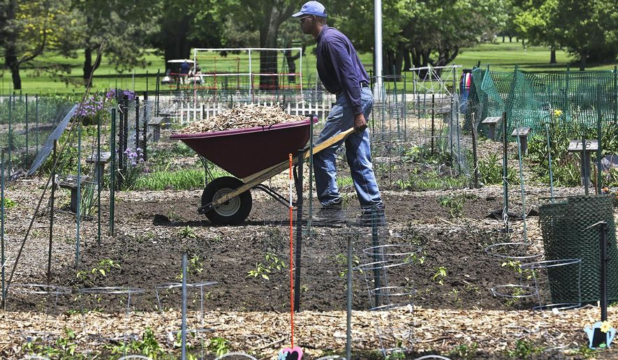 In this May 23, 3016 photo, Leonard Winters pushes a wheelbarrow full of mulch through a narrow path at the Joliet Park District organic community garden in Joliet, Ill. The land provides space for gardeners of all experience levels who are typically seeking a place to grow their own plants. (Eric Ginnard/The Herald-News via AP) MANDATORY CREDIT; CHICAGO TRIBUNE OUT